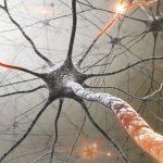 Sistema immunitario e cervello: scienziati scoprono il collegamento