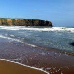 Il riscaldamento globale danneggia spiagge e animali marini