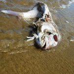 Plastica in mare: il silenzioso inquinante killer