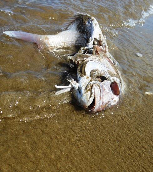 Plastica in mare e nei pesci: i rischi per la salute umana