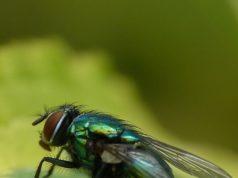 Vi servono rimedi contro le mosche? Ecco 6 alternative naturali agli insetticidi