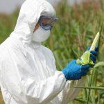 Bayer-Monsanto: nasce il colosso degli OGM