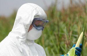 Bayer-Monsanto: nasce il colosso della chimica in agricoltura e dell'ingegneria genetica