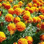 Fiori eduli: tutte le proprietà dei fiori commestibili