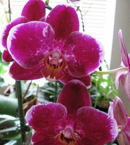 Orto e giardino archivi ambiente bio - Piante in camera ...