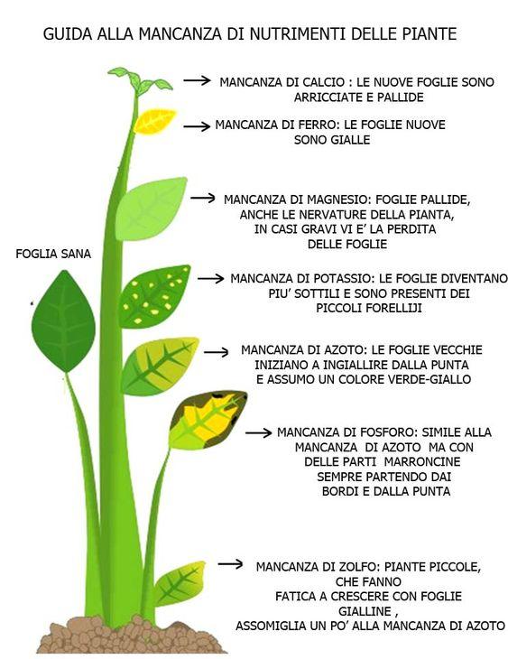 foglie ingiallite rimedi