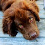 Costipazione canina? 8 rimedi naturali per aiutare il tuo cane