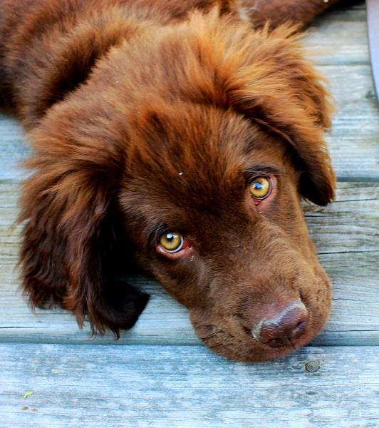 8 rimedi naturali per risolvere la costipazione canina