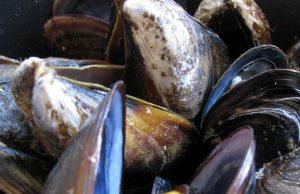 """I frutti di mare ispirano una potente colla bio che potrebbe aiutare a """"riparare"""" il corpo umano"""