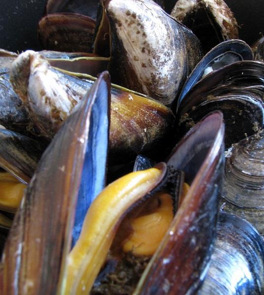 I frutti di mare ispirano una potente colla bio che potrebbe aiutare a