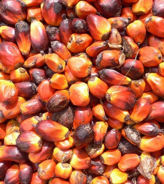Esistono prodotti con olio di palma sostenibile? La classifica WWF