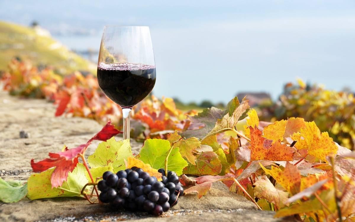 Fino Food Wine
