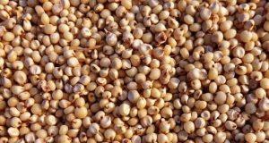 Il sorgo è un'ecellente alternativa gluten free ai cereali più comuni