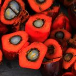 Olio di palma cancerogeno nel latte in polvere