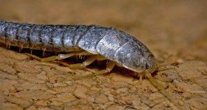 6 rimedi naturali per liberarsi dei vermi della polvere