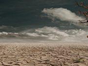 Allarme WWF: entro il 2020 estinzione di massa