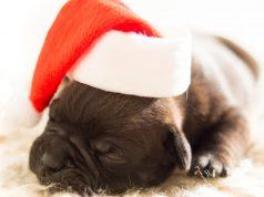 Addobbi natalizi fai da te: ecco come decorare casa con originalità