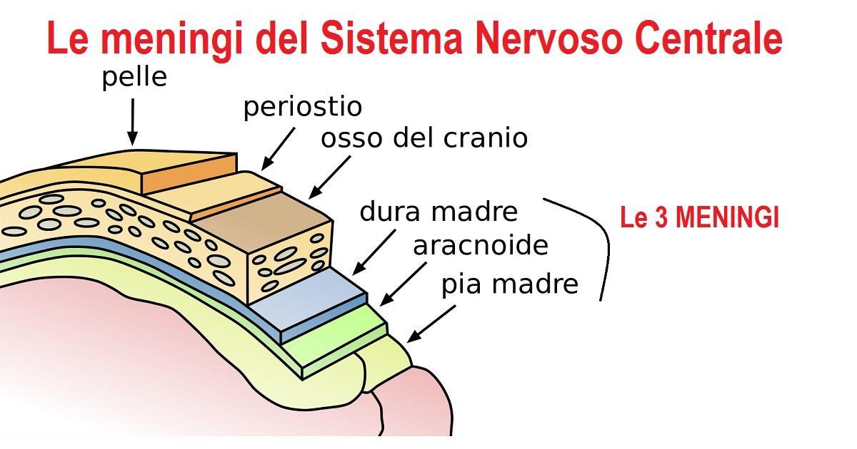 Meningite: c'è un'emergenza in Italia?