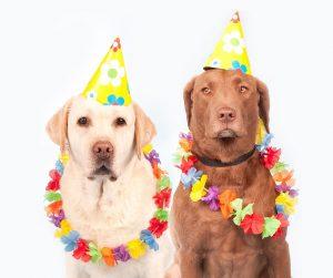 cane festa