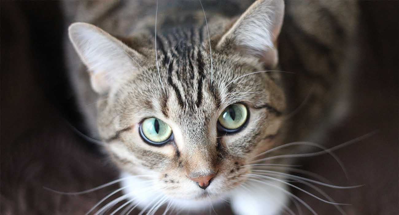 prodotti utili per la toelettatura del gatto
