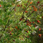 Alberi e arbusti della macchia mediterranea