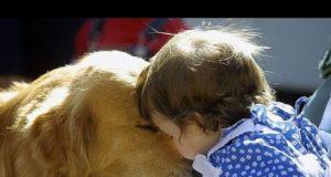 """Il Golden Retriever, il cane """"perfetto"""""""