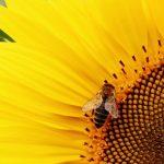 Rivoluzione in Sardegna: ecco il diserbante eco che salva le api dall'estinzione