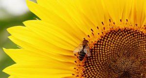 eco diserbante salva le api