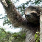 Foresta Amazzonica: la minaccia viene dai fast food