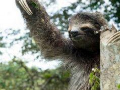 Burger King minaccia la foresta amazzonica
