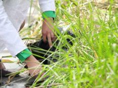 Plant-E ricava energia dalla fotosintesi clorofilliana