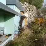 Vespa Velutina: la minaccia per le api e per l'uomo non si ferma