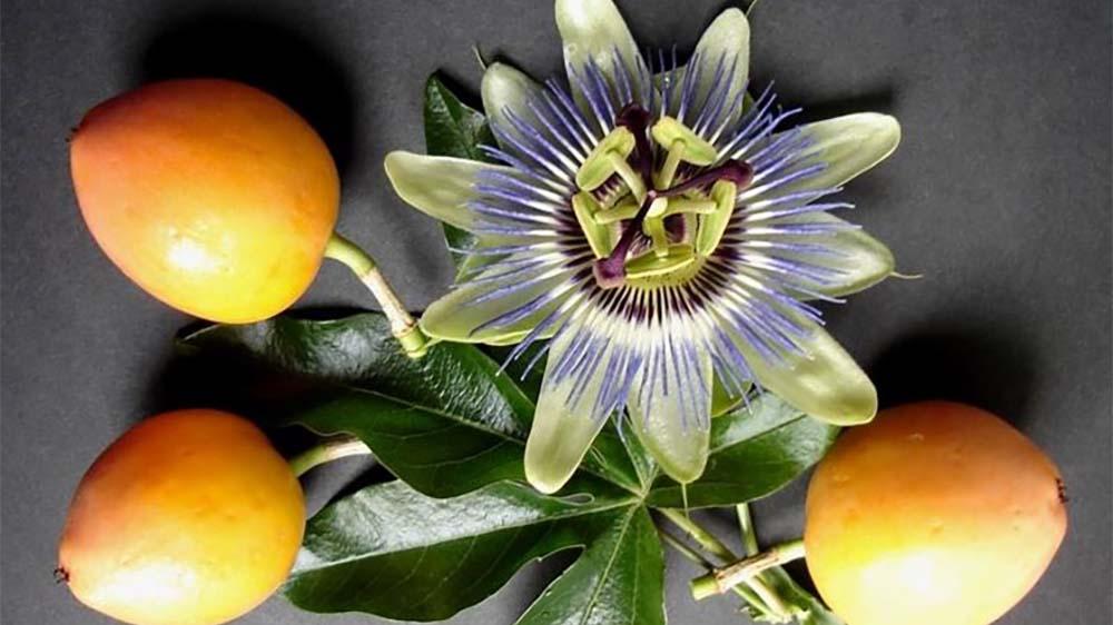 passiflora rimedi naturali