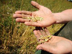 Come riconoscere il vero cibo biologico?