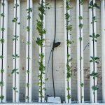 Coltivazione idroponica: ecco tutti i vantaggi di questo metodo