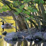 Giornata Mondiale della biodiversità: allarme ONU per le specie a rischio di estinzione