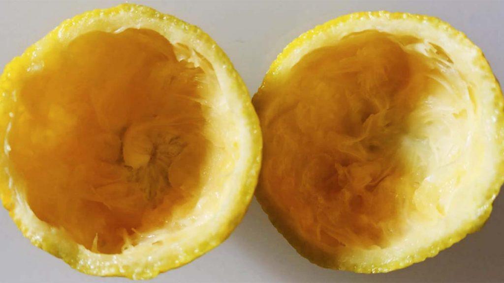 scorza di limone buccia
