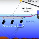 Airgun, effetti devastanti sulla vita marina: lo studio su Nature