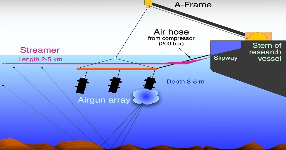 Airgun: devastanti gli effetti sulla fauna marina