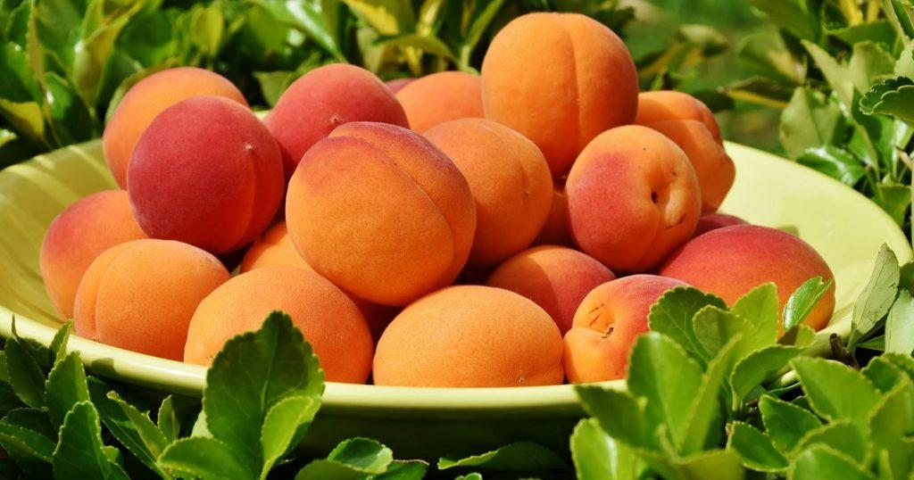 Albicocche: ricette gustose e fresche per insalate di frutta e verdura