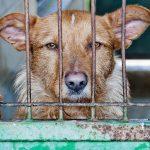 Mai più cani abbandonati: ecco come portarli in vacanza (senza stress)