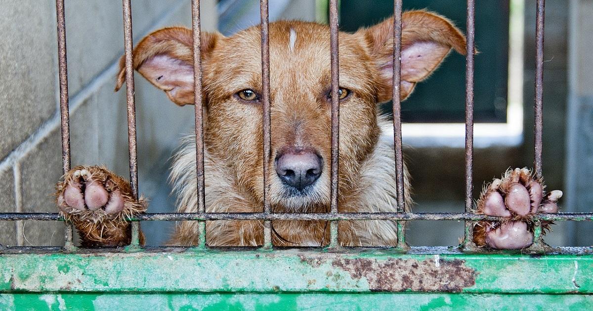 Cani abbandonati per le vacanze: ecco come organizzarsi