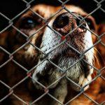 Negozi per animali: stop alla vendita di cani e gatti in California