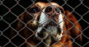 Negozi per animali: stop alla vendita di cani e gatti di razza