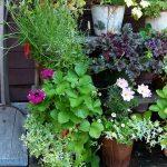 10 consigli utili (e un po' strani) per un giardino perfetto