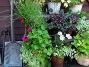 10 consigli per avere un giardino perfetto e sano