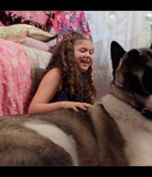 Dog Therapy: la storia di Spartacus e Sammy, sopravvissuta a un massacro