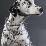 Yulin Festival: migliaia di cani massacrati, cucinati e mangiati in Cina