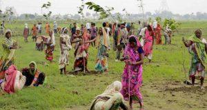 record di alberi piantati india