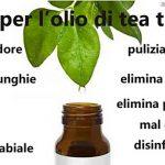 Le molte virtù dell'olio di tea tree